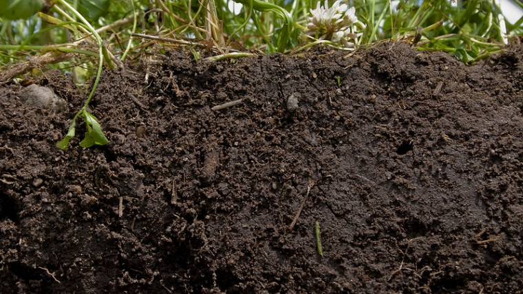 Soil health – the unsung reason to compost