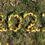 How to be more sustainable in 2021…