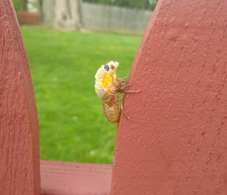 FAQ's Explained: Can I compost cicadas?