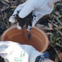 The Ripple Effect of Composting