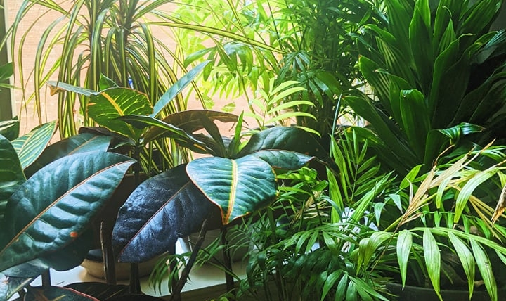 Do's and Don'ts: Using Finished Compost on your Houseplants